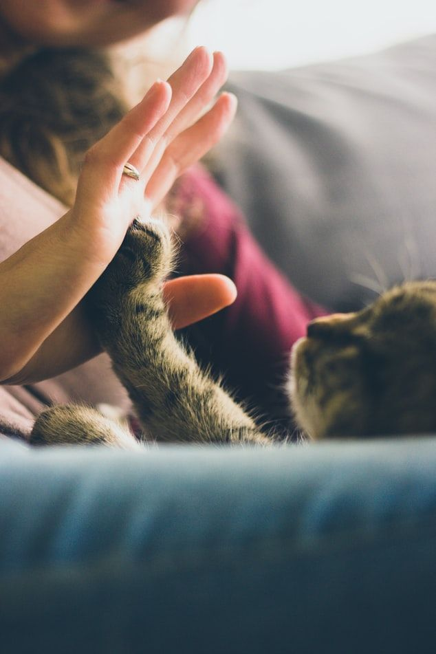 Cat giving owner a high-five with his paw