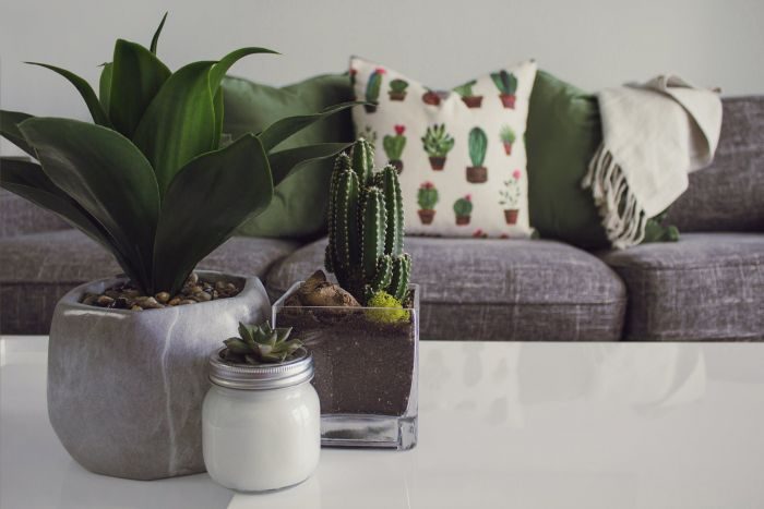 Millennial minamilist style home with three plants in stylish planters and a throw blanket and succulent pattern pillow