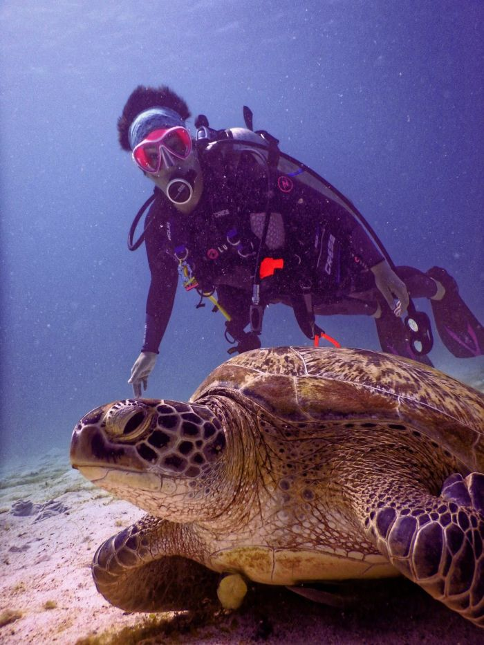 Scuba diver near brown turtle on ocean floor