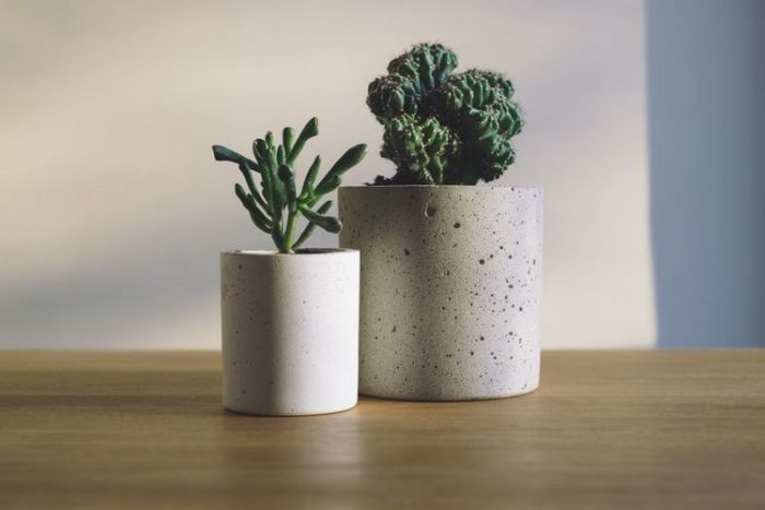 Two succulents in minimalist style pots in a home