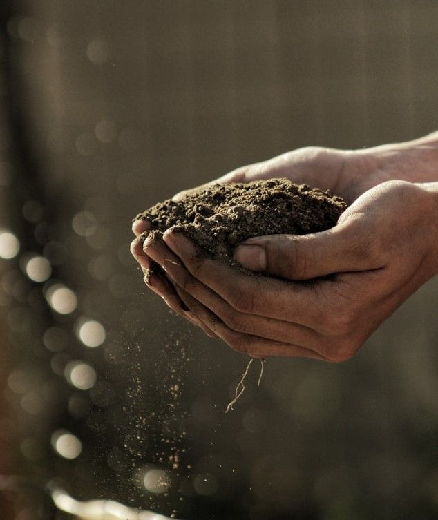Person holding dirt from a garden in their hands