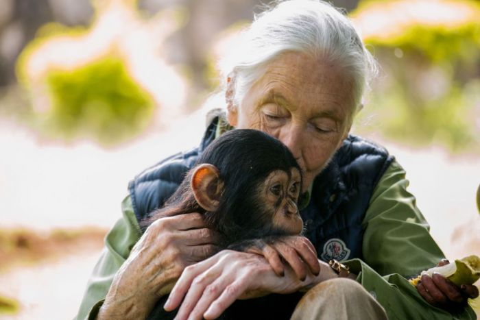 British primatologist Jane Goodall visits a chimpanzee rescue center on June 9, 2018 in Entebbe, Uganda