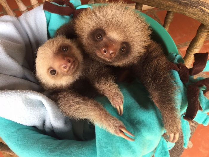 Two sloths in a bucket