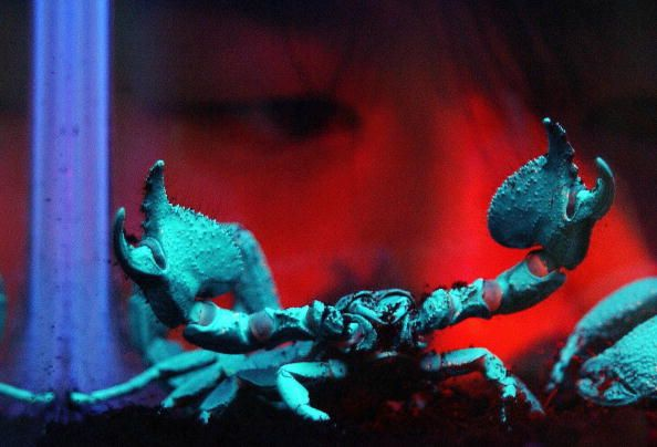 Glowing Scorpion 2